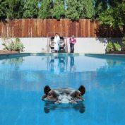 Sparks x Elaine Stocki x Galen Johnson – Hippopotamus